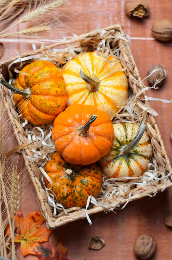 Abóboras, Autumn Thanksgiving e fundo coloridos diferentes de Dia das Bruxas fotografia de stock