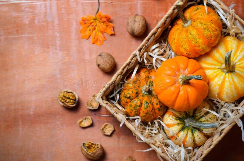 Abóboras, Autumn Thanksgiving e fundo coloridos diferentes de Dia das Bruxas foto de stock royalty free