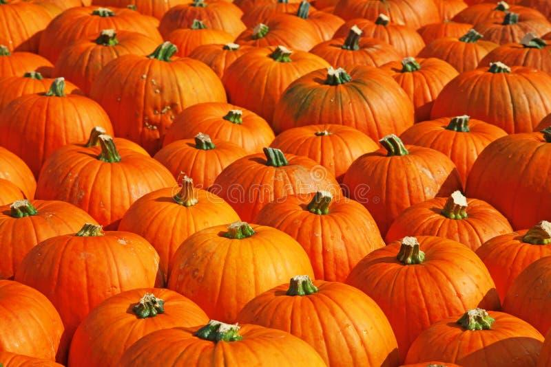 Download Abóboras coloridas foto de stock. Imagem de gourds, terra - 16868730