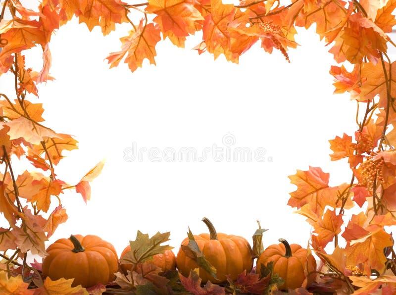 Abóboras com folhas da queda fotos de stock royalty free