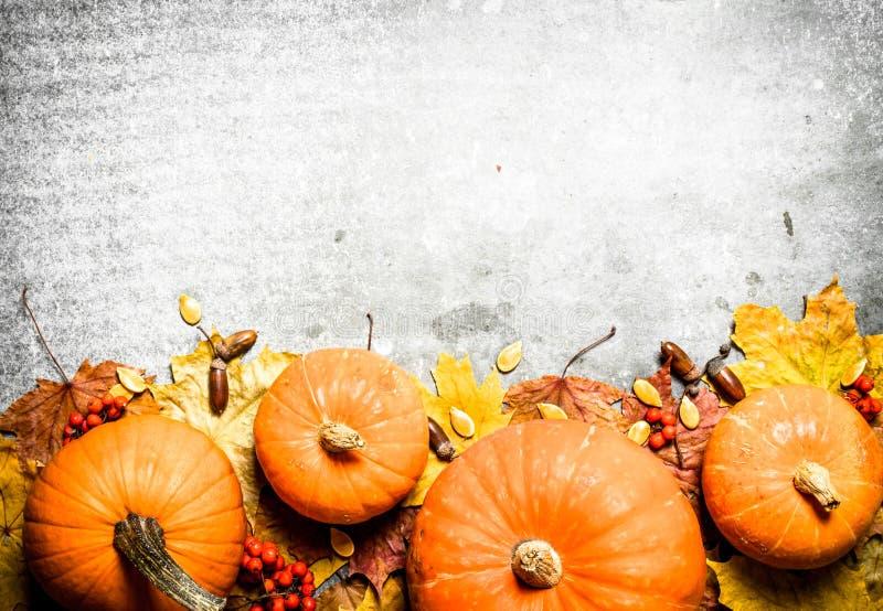 Abóboras com folhas de outono foto de stock royalty free