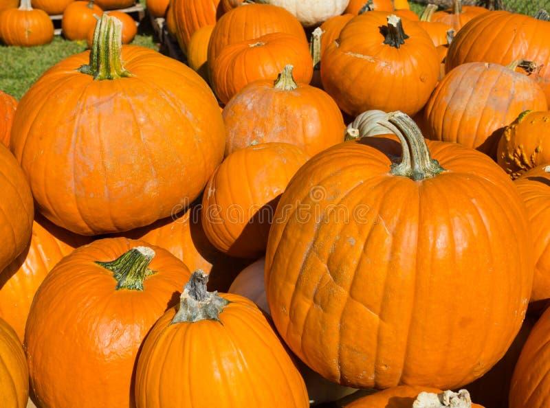 Abóboras de Halloween fotografia de stock royalty free