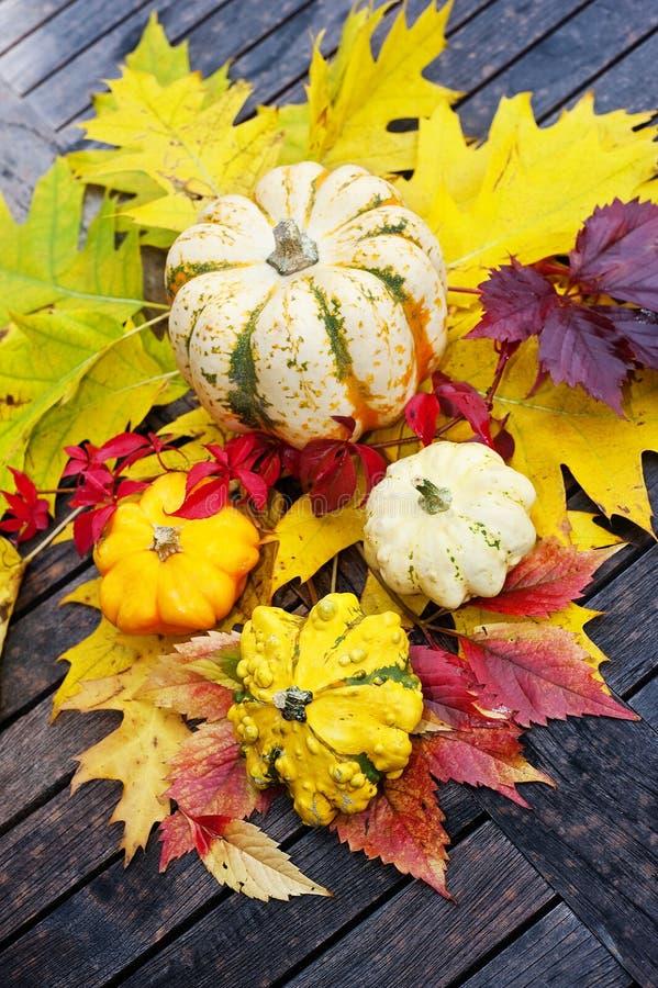 Abóboras de outono foto de stock royalty free