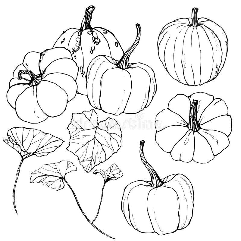 Abóboras do vetor ajustadas para o festival da colheita do outono Abóboras tradicionais pintados à mão com as folhas e os ramos i ilustração do vetor