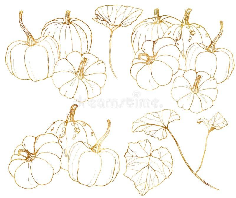 Abóboras douradas do vetor ajustadas para o festival da colheita do outono Abóboras tradicionais pintados à mão com folhas e ramo ilustração stock
