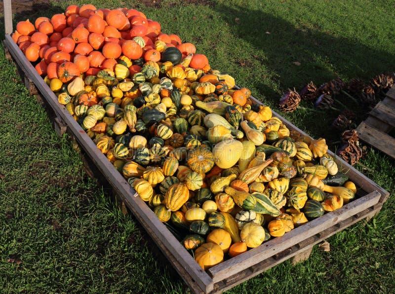 Abóboras e alcachofras na venda da vila do outono em Baviera imagem de stock