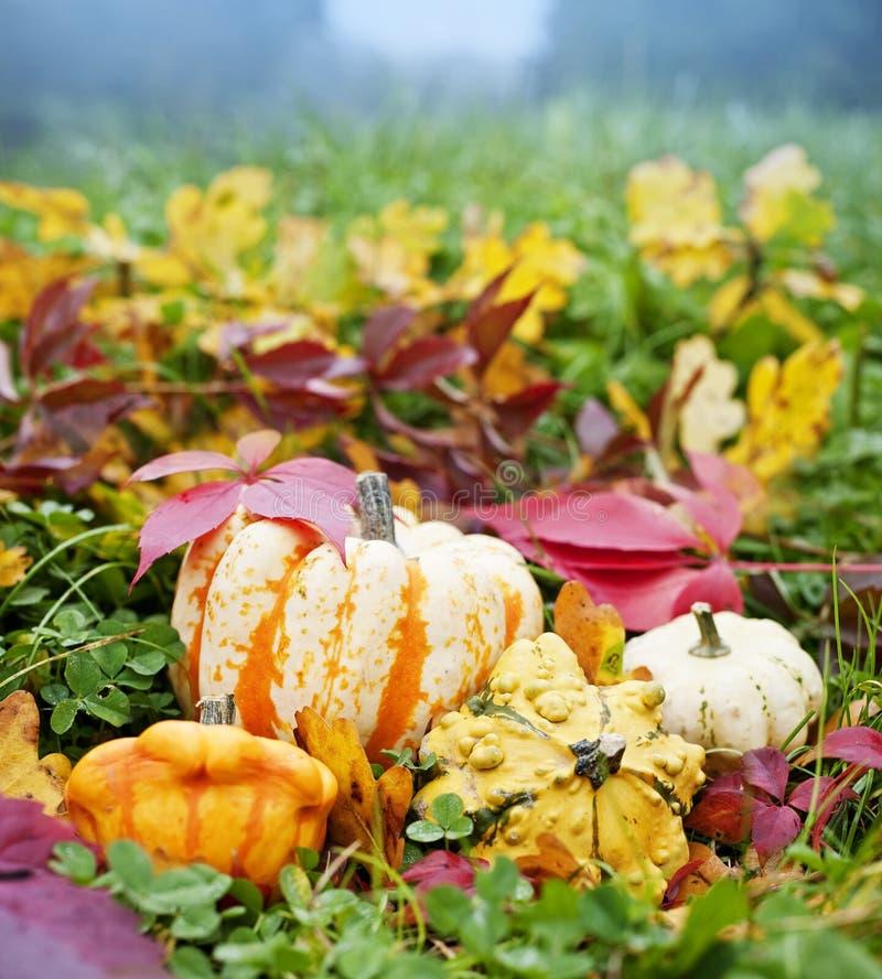 Abóboras e folha do outono na grama foto de stock