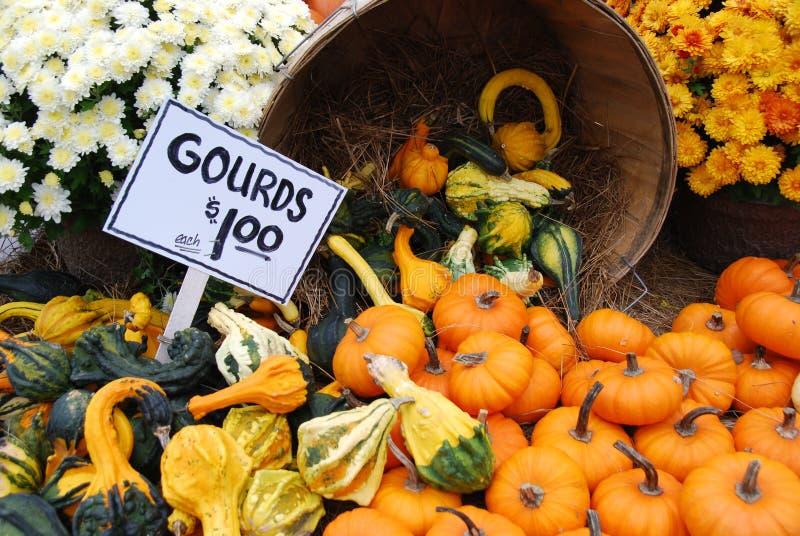Abóboras e Gourds da queda fotos de stock royalty free