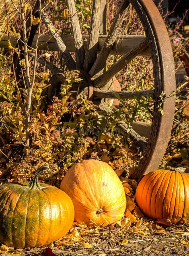 Abóboras e roda de vagão velha foto de stock