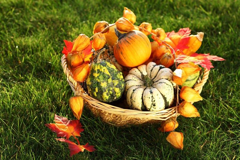 Download Abóboras na grama foto de stock. Imagem de alimento, decorado - 26516474