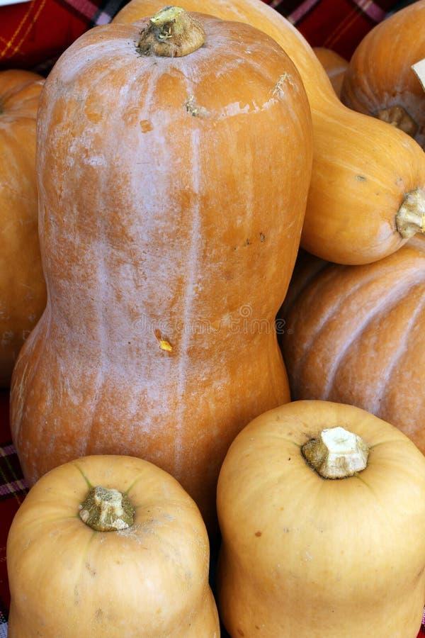 Abóboras orgânicas frescas Abóboras alaranjadas grandes para o feriado de Dia das Bruxas polpas orgânicas frescas para o feriado  imagem de stock royalty free
