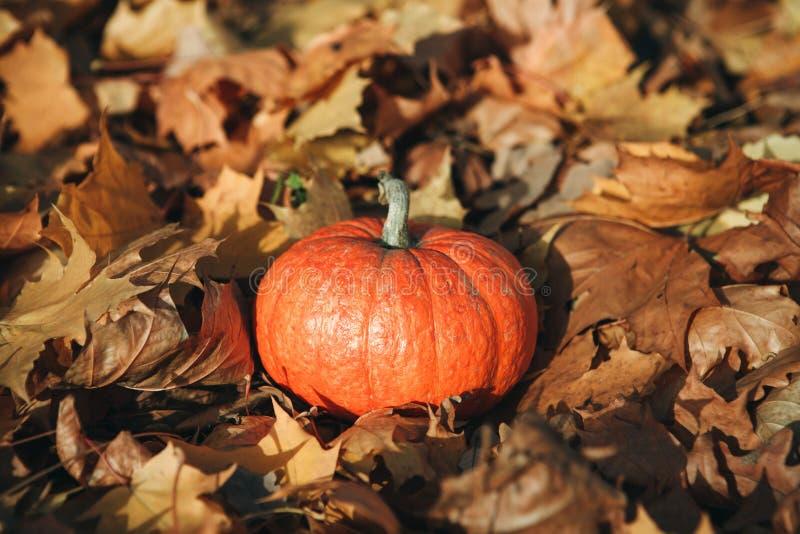 Ab?bora no fundo do outono fotos de stock