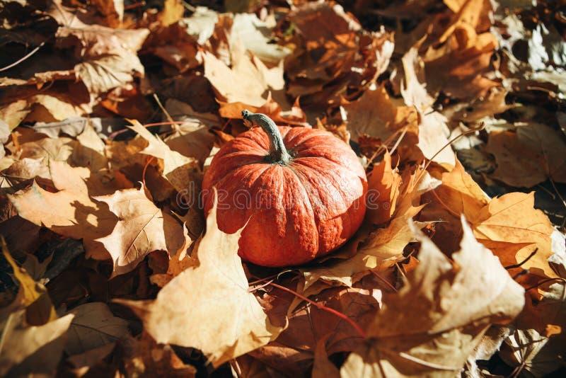 Ab?bora no fundo do outono fotos de stock royalty free