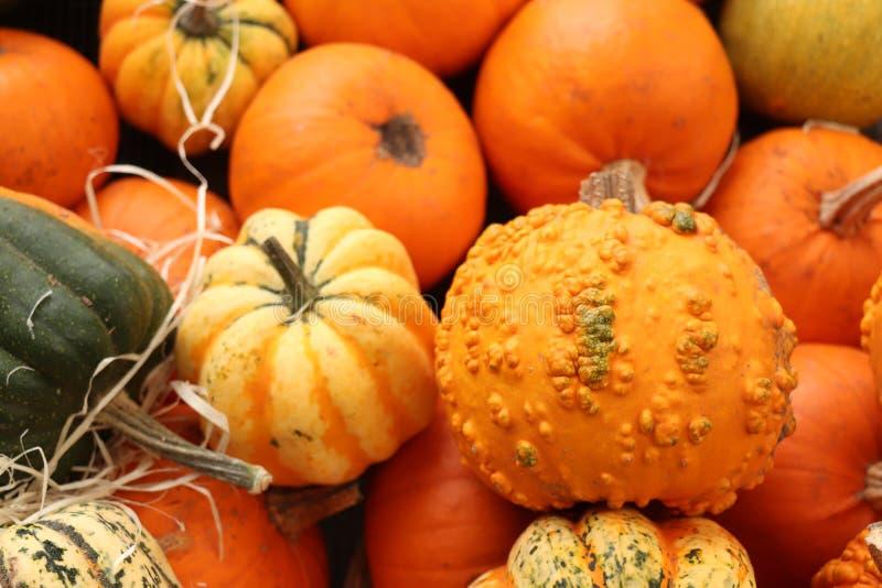 Ab?boras de Autumn Decoration imagens de stock royalty free