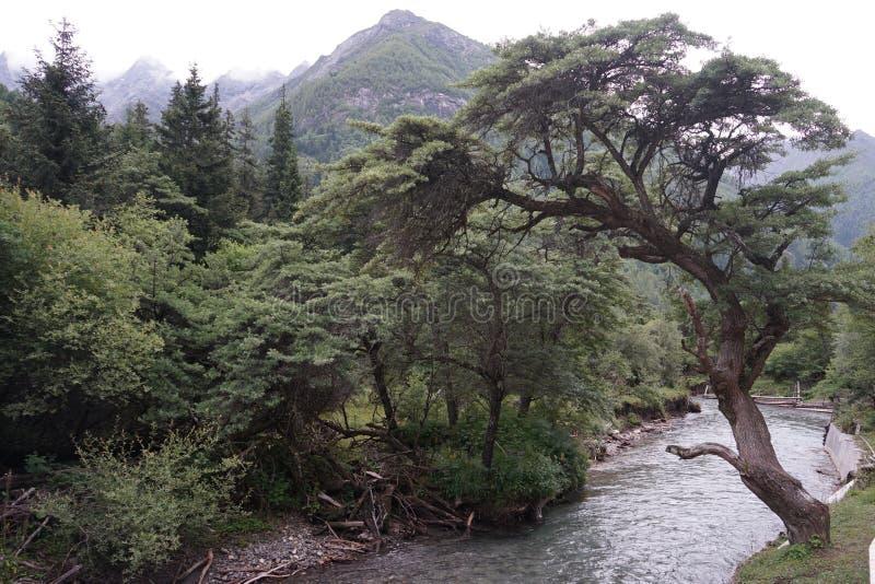 Aba prefectuur in de provincie van Sichuan, vier meisjesberg royalty-vrije stock afbeelding