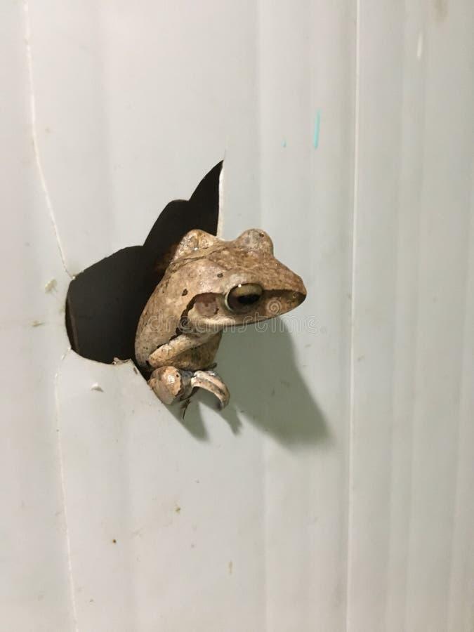 Żaba wśrodku drzwi fotografia royalty free