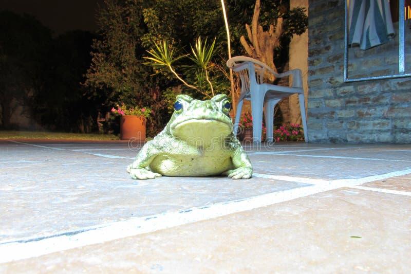 Żaba w podwórzu obrazy royalty free
