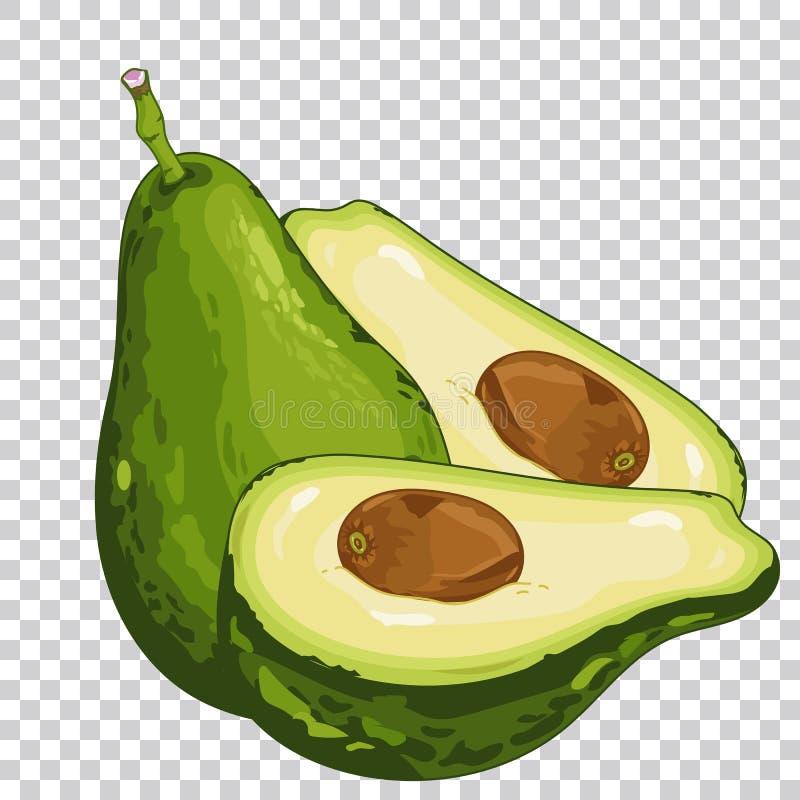 Abacate, alimento biológico, alimento da exploração agrícola ilustração do vetor
