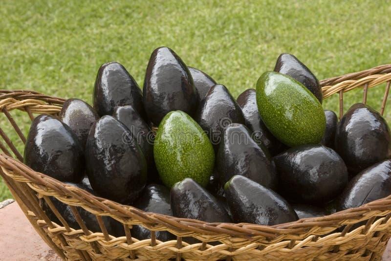 Abacates foto de stock