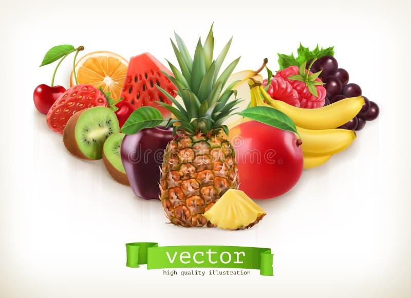 Abacaxi e frutos suculentos, ilustração do vetor ilustração stock