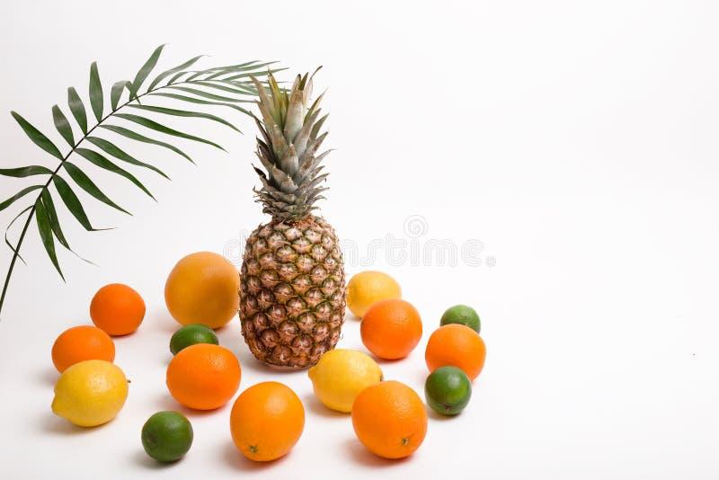 Abacaxi, laranja, limão, toranja, cal, coco e folhas de palmeira no fundo branco imagem de stock