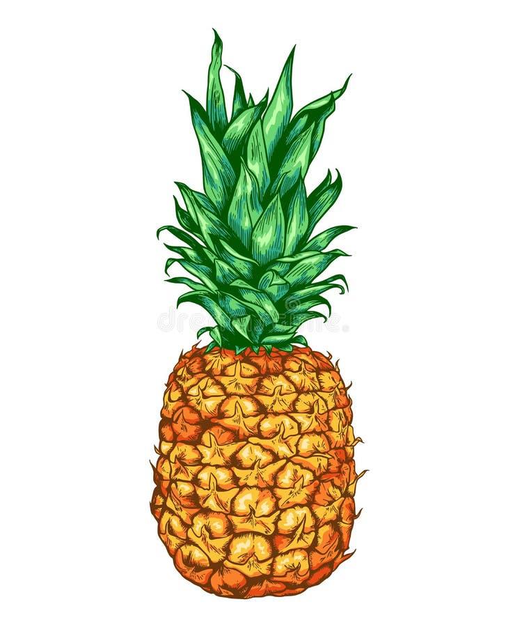 Abacaxi maduro doce tirado mão ilustração stock