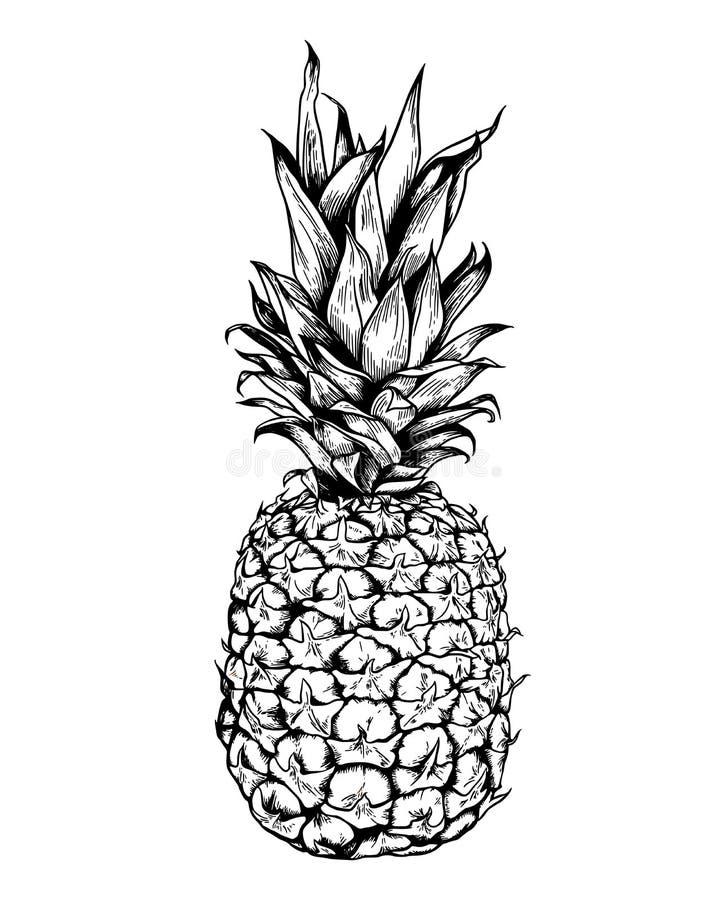 Abacaxi preto tirado mão do vintage do vetor ilustração stock