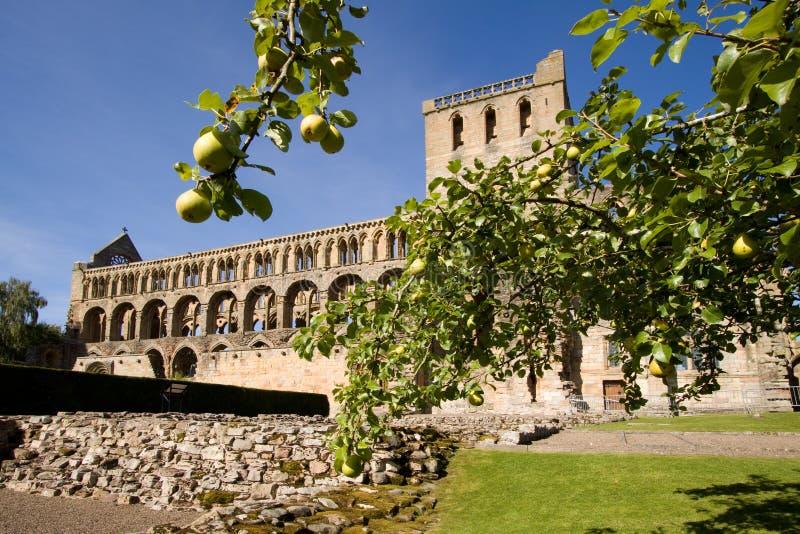 Abadia 2 de Jedburgh imagem de stock