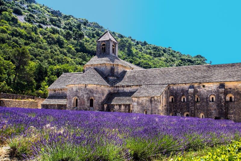 A abadia de Senanque e da florescência enfileira flores da alfazema Gordes, Luberon, Vaucluse, Provence, França fotos de stock royalty free