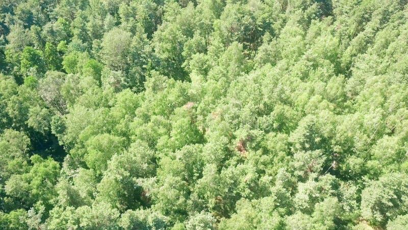 Abajo vista aérea de los árboles forestales europeos en un día de verano soleado imagen de archivo libre de regalías