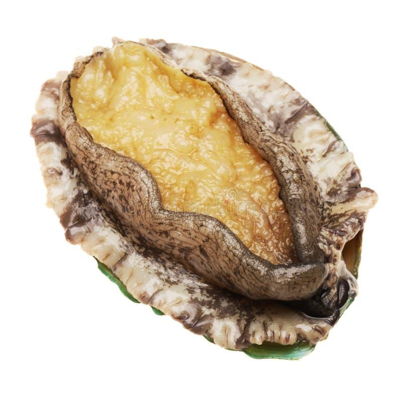 Abalone zdjęcie stock