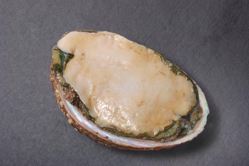 abalone fotos de stock