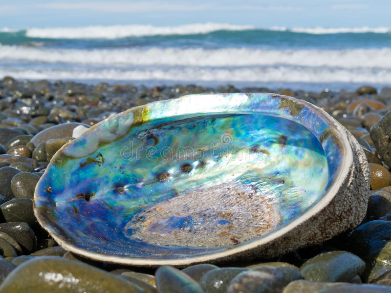 abalone na ląd nacre paua skorupy błyszczący myjący obrazy stock