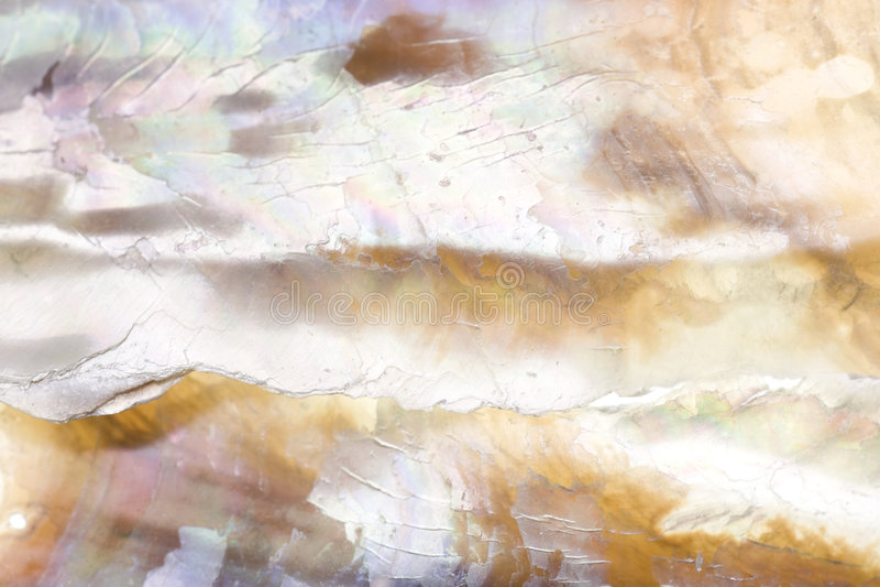 abalone obiektywu makro- skorupy strzału tekstura obraz stock