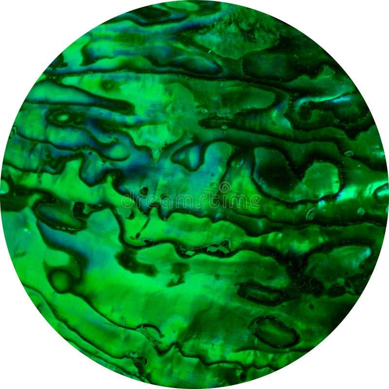 Abalone okrąg zdjęcie stock