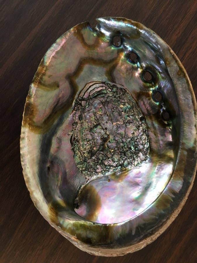 Abalone Shell arkivfoton