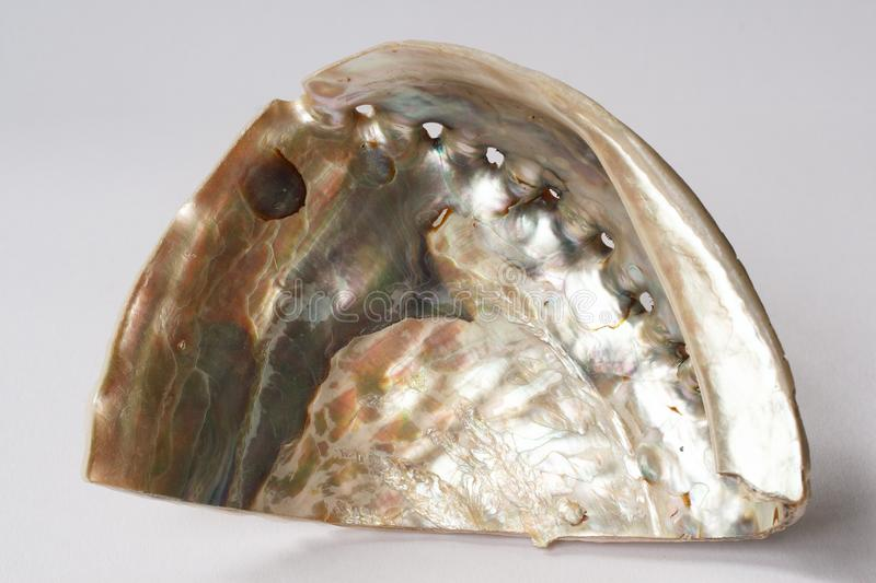 Abalone Shell op witte achtergrond stock foto's