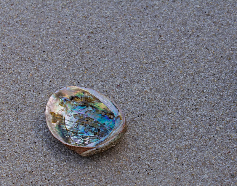 Abalone shell on wet sand. Closeup of abalone shell on wet sand stock photo