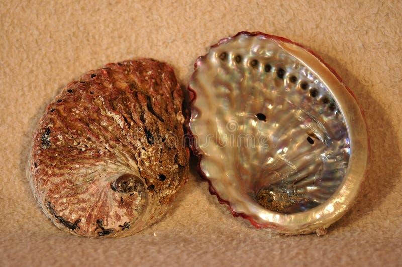 abalone skorupy mórz obraz stock