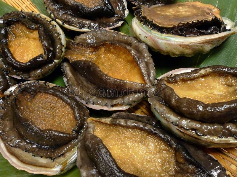 Abalones royalty-vrije stock afbeeldingen