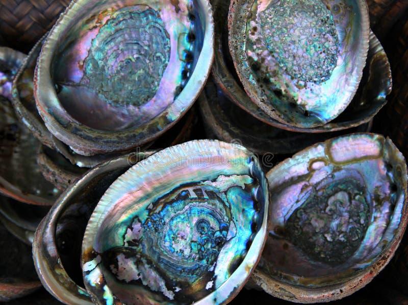 Abaloneskal arkivfoto
