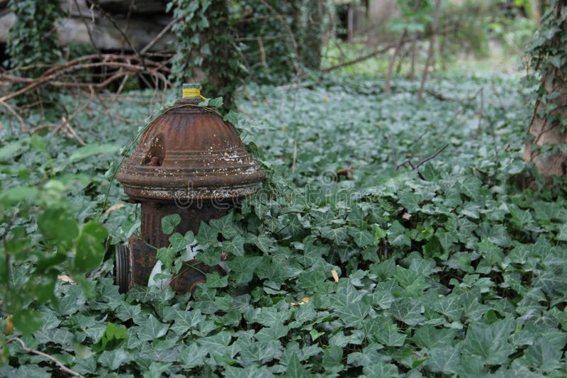 Download Abandon fire hydrant stock image. Image of abandon, greenery - 29368655