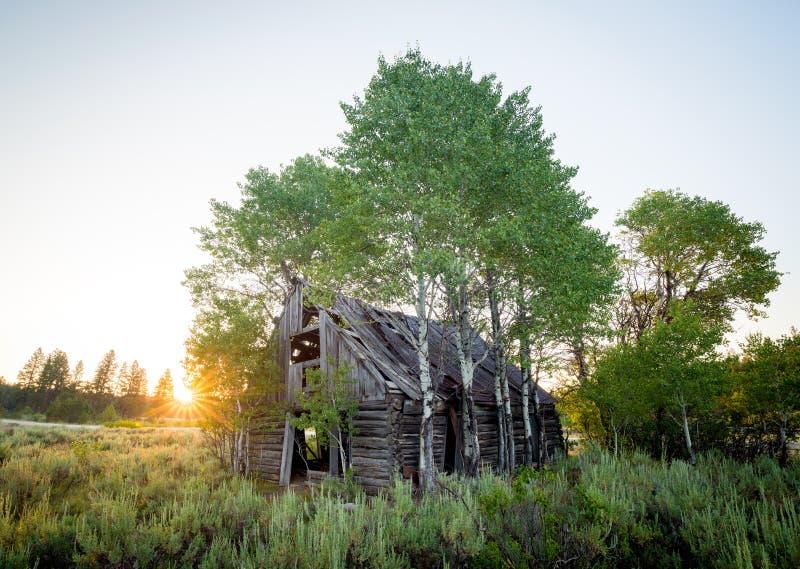 Abandone a cabana rústica de madeira que foi coberto de vegetação com as árvores imagens de stock