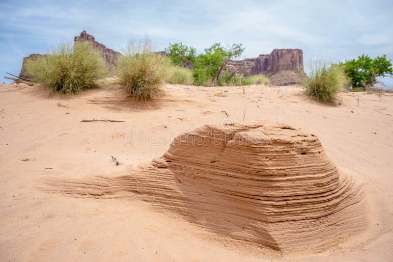 Abandone flores e montes da formiga perto de Rim Road Moab Utah branco imagens de stock royalty free