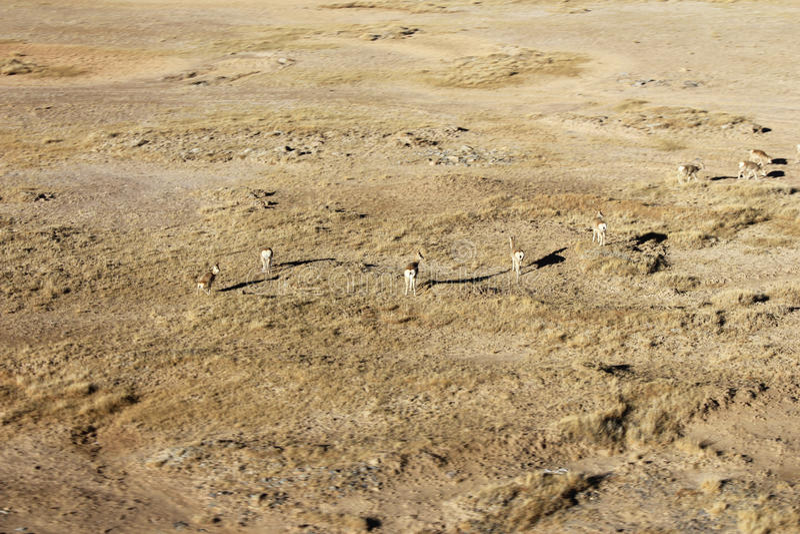 Abandone a natureza selvagem do deserto da areia e a seca exterior da planta verde de grama no material da fotografia de África e imagem de stock royalty free