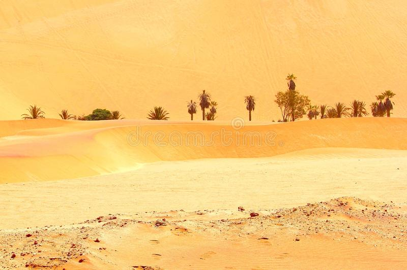 Abandone palmeiras dos oásis, parque nacional de Namib Naukluft, Namíbia foto de stock royalty free