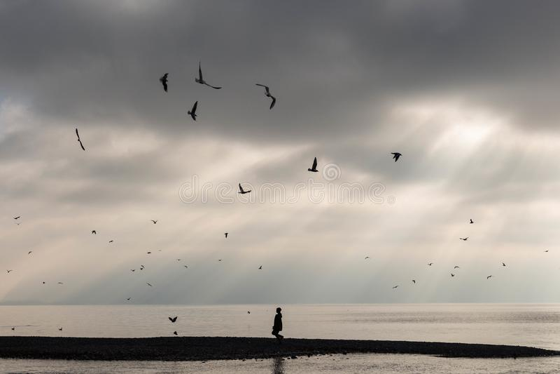 Abandone a praia no por do sol com desconhecido e os pássaros solitários imagens de stock