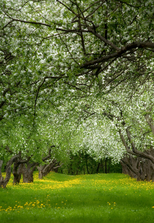 An abandoned apple orchard royalty free stock images