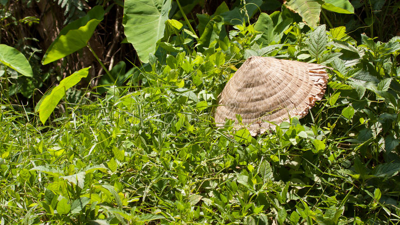 Abandoned Asian Conical Hat  On Green Plants Royalty Free Stock Photo