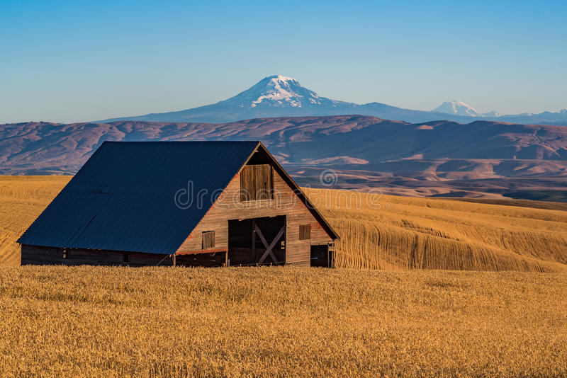 Abandoned Barn in the Wheat Field. An abandoned barn sits deep in wheat ready to harvest in the hills of central Oregon with Mt Adams and Mt Rainier in the royalty free stock photography
